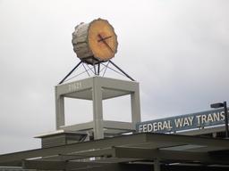 Horloge dans un tronc d'arbre. Source : http://data.abuledu.org/URI/529a5ab0-horloge-dans-un-tronc-d-arbre