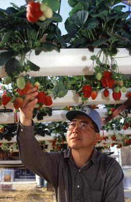 Horticulteur. Source : http://data.abuledu.org/URI/51ed5218-horticulteur
