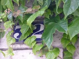 Hôtel particulier à La Rochelle. Source : http://data.abuledu.org/URI/5821f198-hotel-particulier-a-la-rochelle