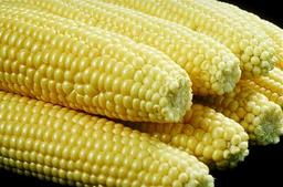 Huit épis de maïs doux. Source : http://data.abuledu.org/URI/5288c7df-huit-epis-de-mais-doux