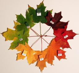 Huit feuilles d'érable de toutes les couleurs. Source : http://data.abuledu.org/URI/52785059-huit-feuilles-d-erable-de-toutes-les-couleurs