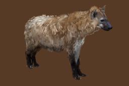 Hyène. Source : http://data.abuledu.org/URI/572b7bdb-hyene-