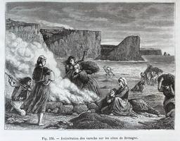 Incinération du varech sur les côtes de Bretagne en 1873. Source : http://data.abuledu.org/URI/56bb9681-incineration-du-varech-sur-les-cotes-de-bretagne-en-1873