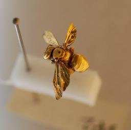 Insecte doré. Source : http://data.abuledu.org/URI/50b3555d-insecte-dore
