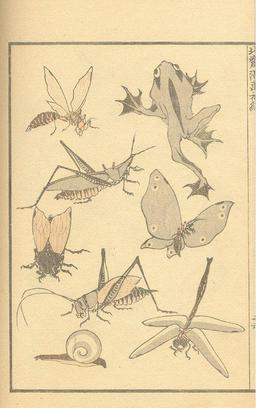 Insectes, escargot et grenouilles. Source : http://data.abuledu.org/URI/47f52c84-insectes-escargot-et-grenouilles