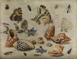 Insectes et coquillages en 1653. Source : http://data.abuledu.org/URI/54d146f8-insectes-et-coquillages-en-1653