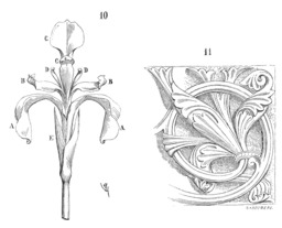 Iris et fleur de lys. Source : http://data.abuledu.org/URI/50d6df39-iris-et-fleur-de-lys