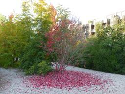 Jardin botanique de Bordeaux. Source : http://data.abuledu.org/URI/580a9a39-jardin-botanique-de-bordeaux