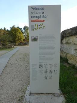 Jardin botanique de Bordeaux. Source : http://data.abuledu.org/URI/580a9b25-jardin-botanique-de-bordeaux