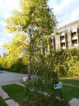 Jardin botanique de Bordeaux. Source : http://data.abuledu.org/URI/580a9cb2-jardin-botanique-de-bordeaux