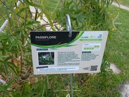 Jardin botanique de Bordeaux. Source : http://data.abuledu.org/URI/580a9cee-jardin-botanique-de-bordeaux