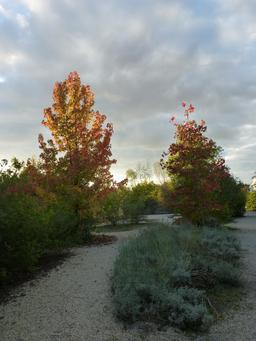 Jardin botanique de Bordeaux. Source : http://data.abuledu.org/URI/580a9d99-jardin-botanique-de-bordeaux