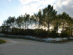 Jardin botanique de Bordeaux. Source : http://data.abuledu.org/URI/580aa03e-jardin-botanique-de-bordeaux