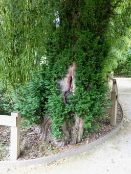Jardin botanique de La Rochelle. Source : http://data.abuledu.org/URI/5821b859-jardin-botanique-de-la-rochelle