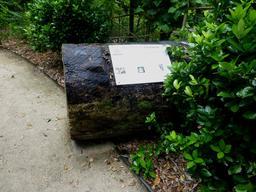 Jardin botanique de La Rochelle. Source : http://data.abuledu.org/URI/5821b8ac-jardin-botanique-de-la-rochelle