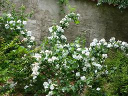 Jardin botanique de La Rochelle. Source : http://data.abuledu.org/URI/5821b8f3-jardin-botanique-de-la-rochelle
