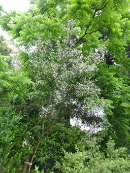Jardin botanique de La Rochelle. Source : http://data.abuledu.org/URI/5821b913-jardin-botanique-de-la-rochelle