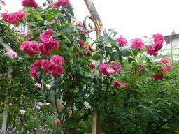 Jardin botanique de La Rochelle. Source : http://data.abuledu.org/URI/5821b98d-jardin-botanique-de-la-rochelle