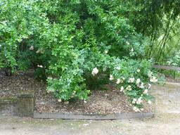 Jardin botanique de La Rochelle. Source : http://data.abuledu.org/URI/5821ba05-jardin-botanique-de-la-rochelle