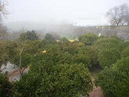 Jardin d'orangers. Source : http://data.abuledu.org/URI/51df77a4-jardin-d-orangers
