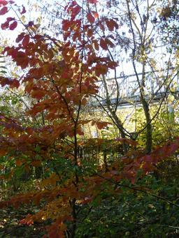 Jardin du musée de l'école de Nancy. Source : http://data.abuledu.org/URI/5818feb4-jardin-du-musee-de-l-ecole-de-nancy