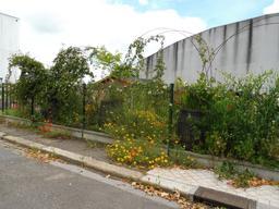 Jardin partagé à Bordeaux. Source : http://data.abuledu.org/URI/5920d69f-jardin-partage-a-bordeaux