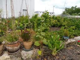 Jardin partagé à Bordeaux. Source : http://data.abuledu.org/URI/5920d709-jardin-partage-a-bordeaux