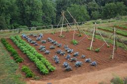 Jardin potager. Source : http://data.abuledu.org/URI/5041ecc1-jardin-potager
