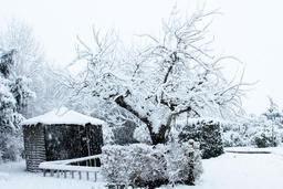 Jardin sous la neige. Source : http://data.abuledu.org/URI/54d1018c-jardin-sous-la-neige