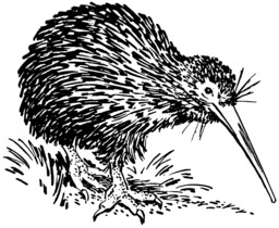 Kiwi. Source : http://data.abuledu.org/URI/53e9d0c6-kiwi