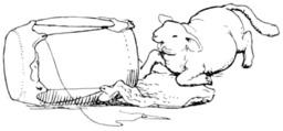 L'agnelet. Source : http://data.abuledu.org/URI/50977c1f-l-agnelet