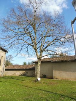 L'arbre de la liberté à Pujols-sur-Ciron. Source : http://data.abuledu.org/URI/58dae1ed-l-arbre-de-la-liberte-a-pujols-sur-ciron