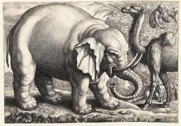 L'éléphant, le chameau et les singes. Source : http://data.abuledu.org/URI/54b2eff4-l-elephant-le-chameau-et-les-singes