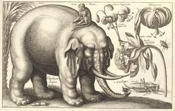L'éléphant, le singe et les fleurs. Source : http://data.abuledu.org/URI/54b2f1bd-l-elephant-le-singe-et-les-fleurs