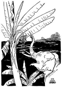 L'enfant d'éléphant. Source : http://data.abuledu.org/URI/508467fe-l-enfant-d-elephant