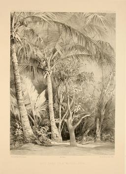 L'île de Manga-Reva en Polynésie en 1838. Source : http://data.abuledu.org/URI/59806f3e-l-ile-de-manga-reva-en-polynesie-en-1838