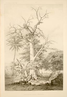 L'île de Manga-Reva en Polynésie en 1838. Source : http://data.abuledu.org/URI/59806f9c-l-ile-de-manga-reva-en-polynesie-en-1838