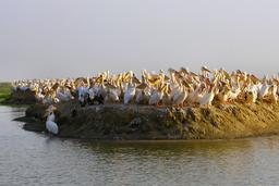 L'île des Pélicans au Sénégal. Source : http://data.abuledu.org/URI/52d5585e-l-ile-des-pelicans-au-senegal