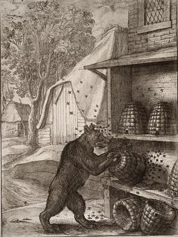 L'ours et le miel. Source : http://data.abuledu.org/URI/51942e14-l-ours-et-le-miel