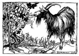 La chèvre et la vigne. Source : http://data.abuledu.org/URI/517d4e5e-la-chevre-et-la-vigne