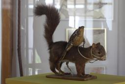 La grenouille et l'écureuil. Source : http://data.abuledu.org/URI/543c02d4-la-grenouille-et-l-ecureuil