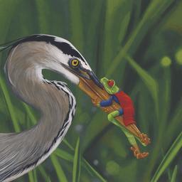 La grenouille et le héron. Source : http://data.abuledu.org/URI/5351bd54-la-grenouille-et-le-heron