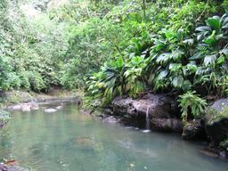 La Lézarde en Guadeloupe. Source : http://data.abuledu.org/URI/5276a3df-la-lezarde-en-guadeloupe