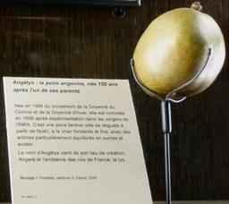 La poire angevine. Source : http://data.abuledu.org/URI/5630007a-la-poire-angevine