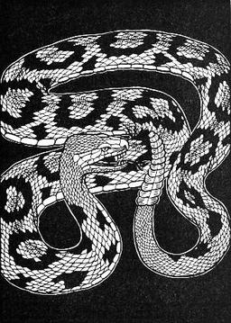 La Tête et la queue du Serpent. Source : http://data.abuledu.org/URI/519c680e-la-tete-et-la-queue-du-serpent