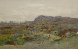 Lande de bruyère. Source : http://data.abuledu.org/URI/51350d88-lande-de-bruyere