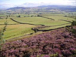 Lande de bruyère en Angleterre. Source : http://data.abuledu.org/URI/5058d9cd-lande-de-bruyere-en-angleterre