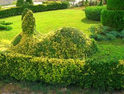 Lapin de verdure. Source : http://data.abuledu.org/URI/515a69e9-lapin-de-verdure