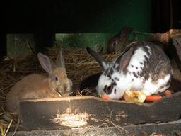 Lapins dans un clapier. Source : http://data.abuledu.org/URI/53052958-lapins-dans-un-clapier