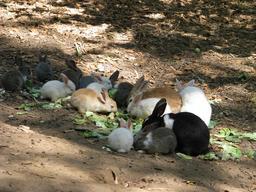 Lapins mangeant des feuilles de salade. Source : http://data.abuledu.org/URI/535ba1b3-lapins-mangeant-des-feuilles-de-salade